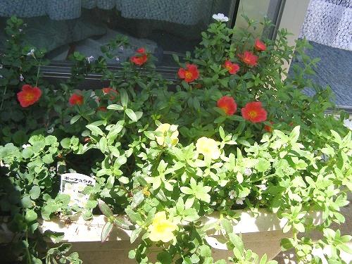 夏によく咲くという_d0147812_13113427.jpg