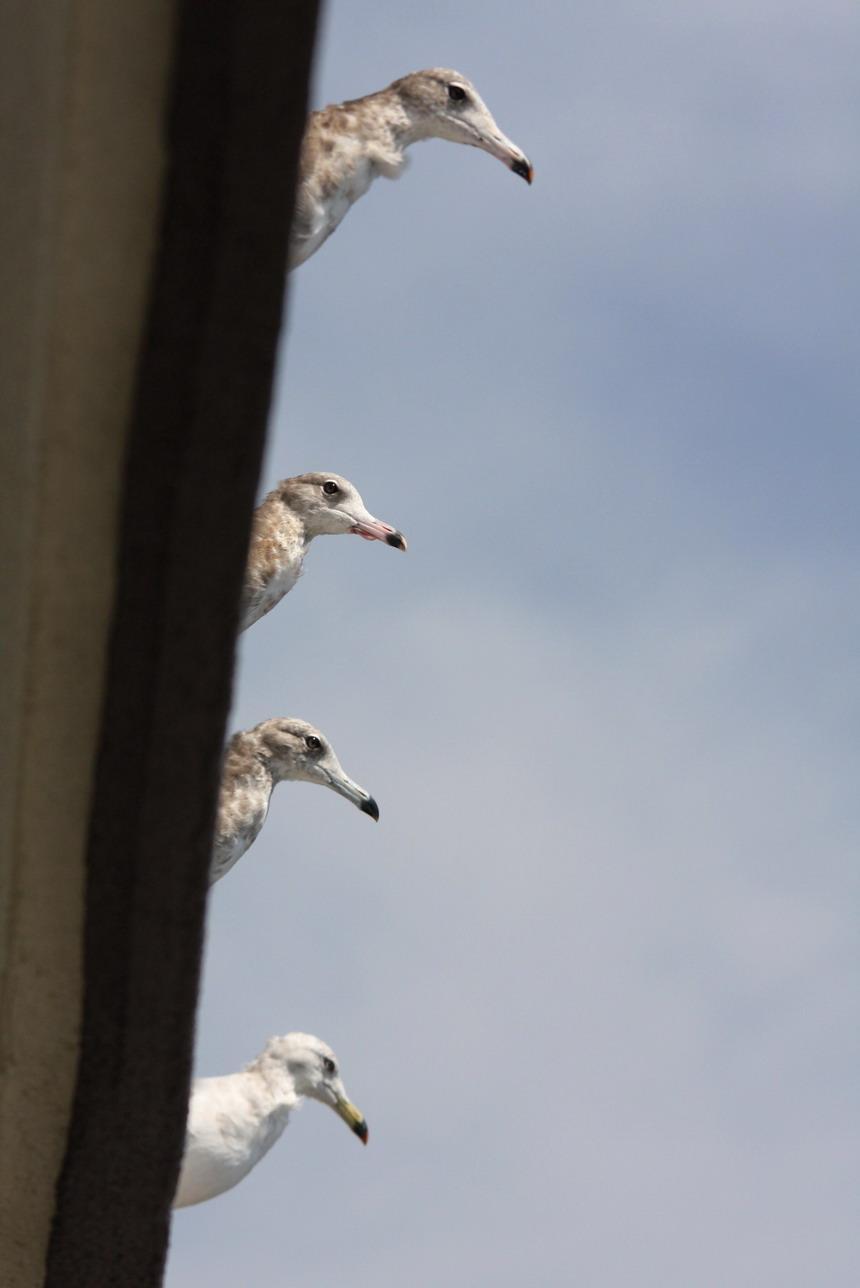 屋根の上の カモメ No.3_d0039021_1831988.jpg