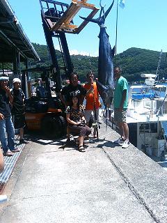 豊後水道 Opal艇 クロカワ106kg [カジキ マグロ トローリング]_f0009039_14525853.jpg