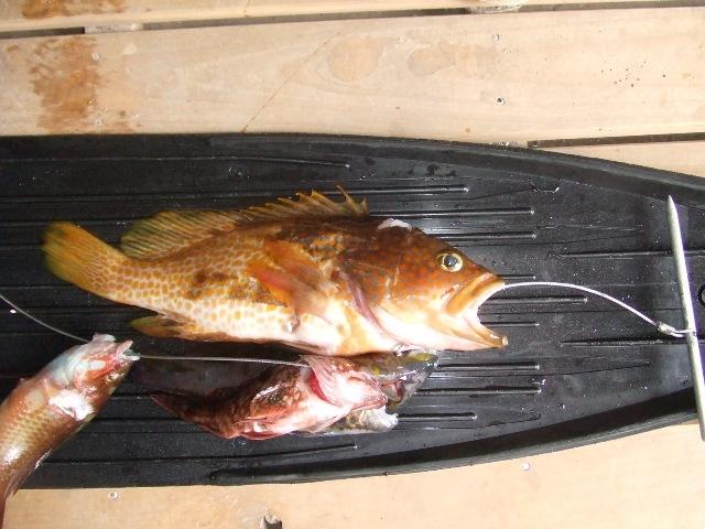 魚突き 単独_d0007657_19274389.jpg