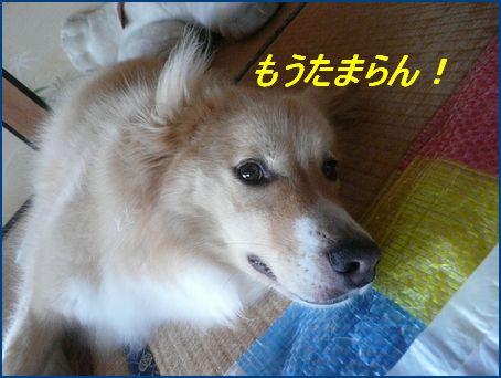 a0100160_1856057.jpg
