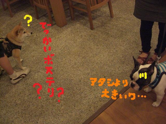 b0137064_2061919.jpg
