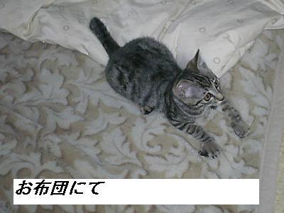 b0112380_19455049.jpg