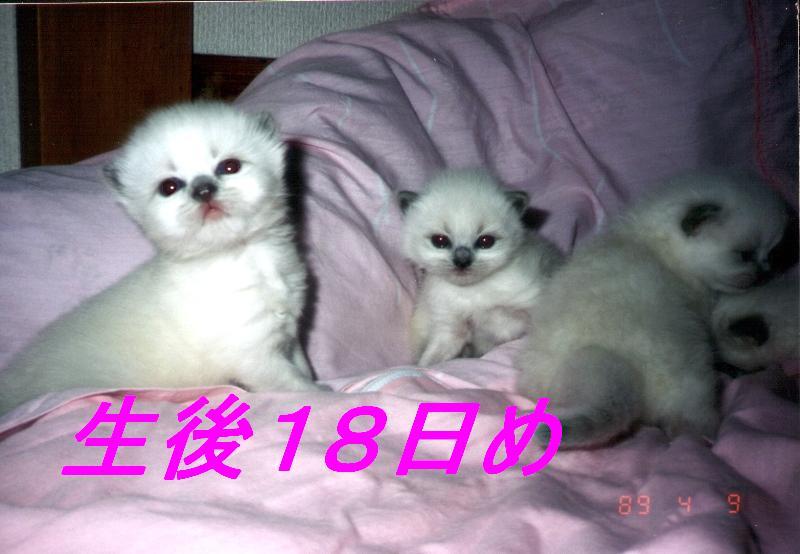 b0150088_206225.jpg