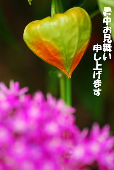 f0046614_20555972.jpg