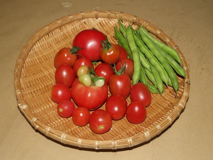 トマトとインゲン_c0116915_23452312.jpg