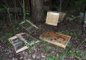 ミツバチ達はどこへ_b0038919_15511679.jpg