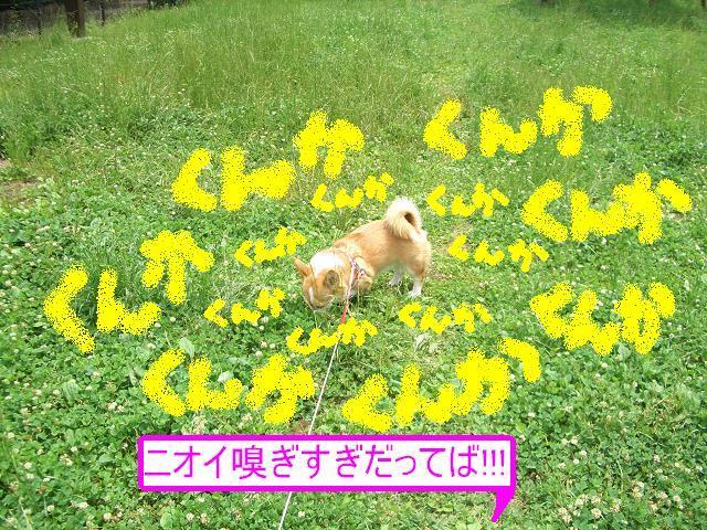c0134720_5272064.jpg