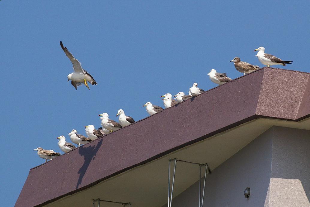 屋根の上の カモメ No.4_d0039021_18391354.jpg