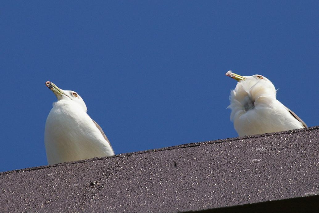 屋根の上の カモメ No.4_d0039021_18393021.jpg