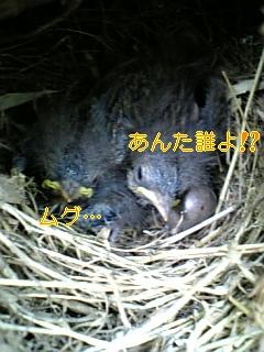f0148927_172326.jpg