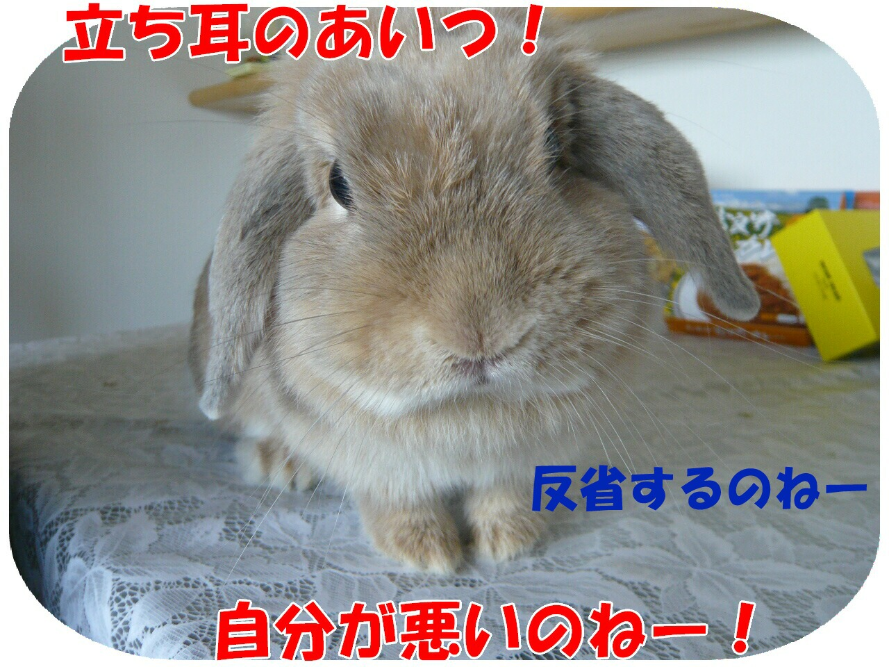 c0151439_1441981.jpg