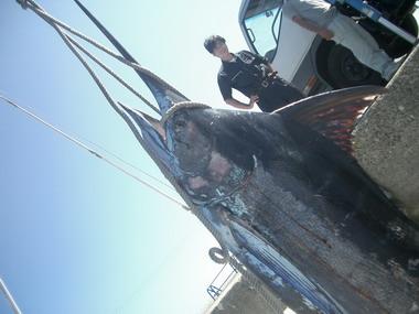 志摩沖のデスペラード艇のカジキキャッチ情報です [カジキ マグロ トローリング]_f0009039_1121083.jpg