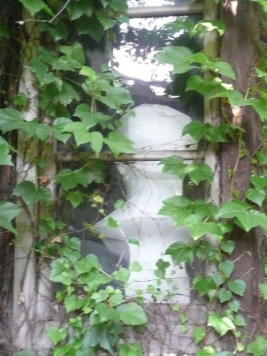 京都の旧岡村宇太郎邸_c0112559_10503528.jpg