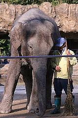 ゾウは鼻が長い。_b0141773_15443053.jpg