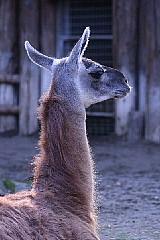 ゾウは鼻が長い。_b0141773_1545121.jpg