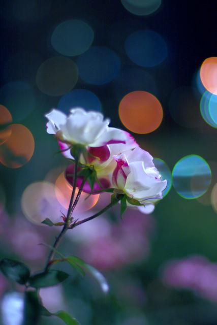 「詩の黄金の庭 吉増剛造展」/カルチャーナイト_d0101676_21423518.jpg