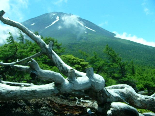 7月25日 富士5合目お中道の花と風景_e0145782_20113739.jpg