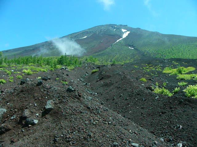 7月25日 富士5合目お中道の花と風景_e0145782_201236.jpg