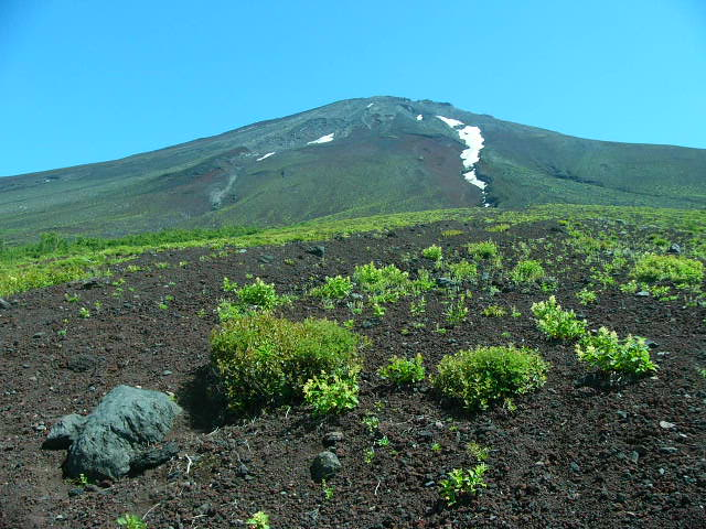 7月25日 富士5合目お中道の花と風景_e0145782_20123892.jpg