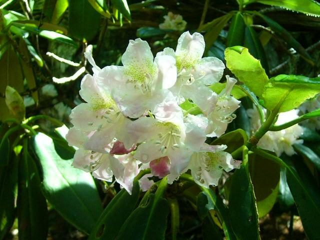 7月25日 富士5合目お中道の花と風景_e0145782_2083679.jpg