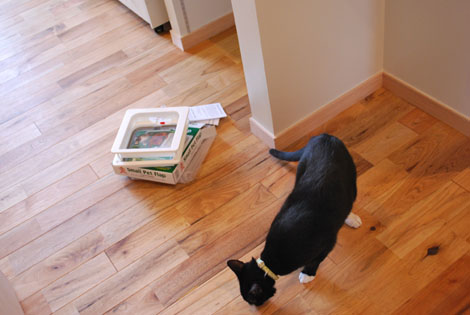 猫ドアが欲しい。_f0163195_1451492.jpg