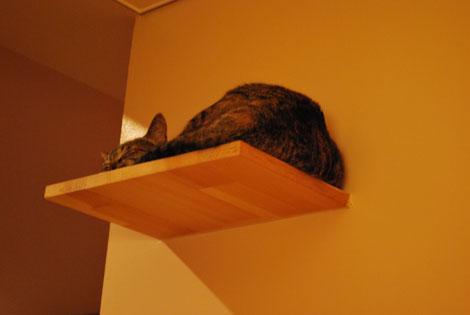 猫ドアが欲しい。_f0163195_1454024.jpg