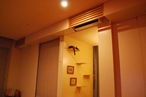 猫ドアが欲しい。_f0163195_1455124.jpg