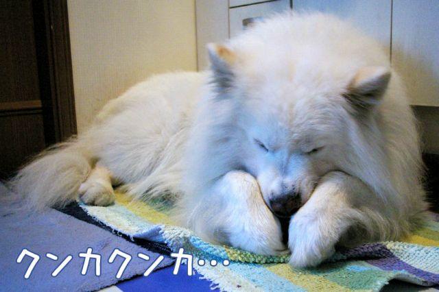 おやすみの前は_c0062832_16563731.jpg