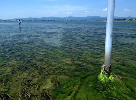 Green Tide_e0136764_13384911.jpg