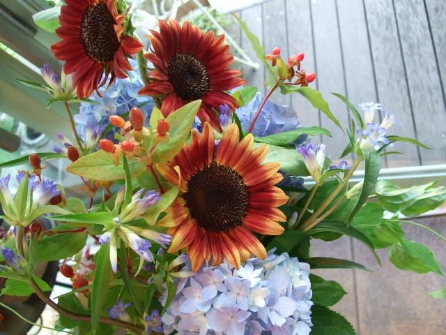 オークリーフ(茶色の向日葵と水色の紫陽花の花束)_f0049672_13524588.jpg