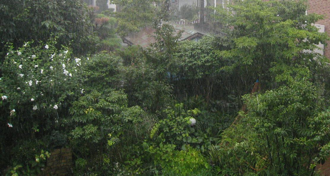 昨日の雨      ~停電2回~_a0107574_21365214.jpg