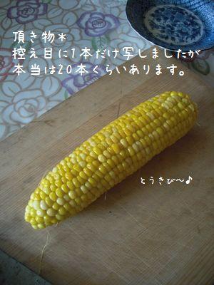 b0000885_149453.jpg
