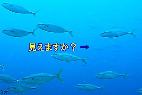 b0044726_16103334.jpg