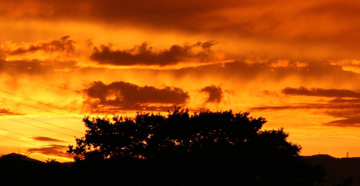 きれいな夕日        今日の一枚_a0107574_2127092.jpg