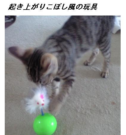 b0112380_1032011.jpg