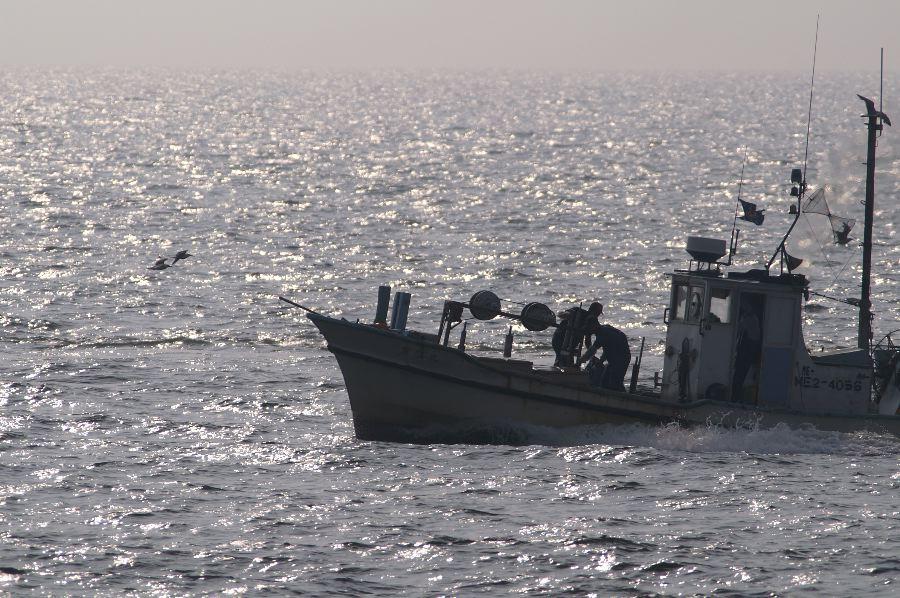 漁船とウミネコ_d0037282_18493846.jpg