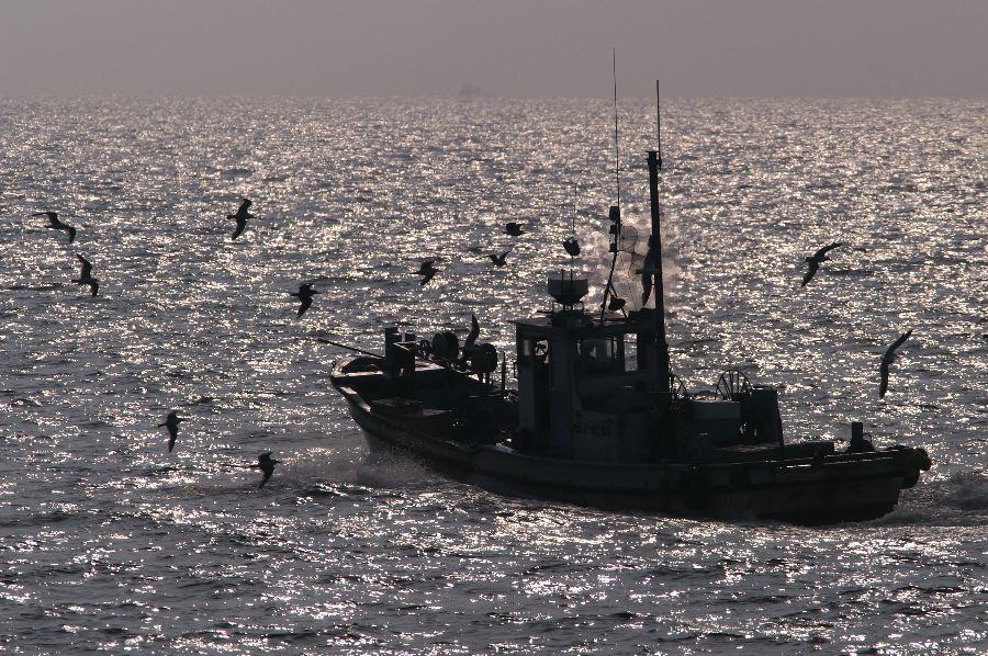 漁船とウミネコ_d0037282_1951111.jpg