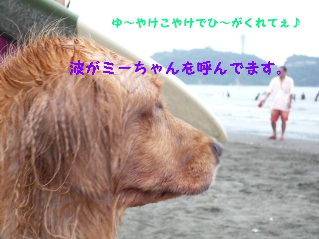 c0159512_14501562.jpg