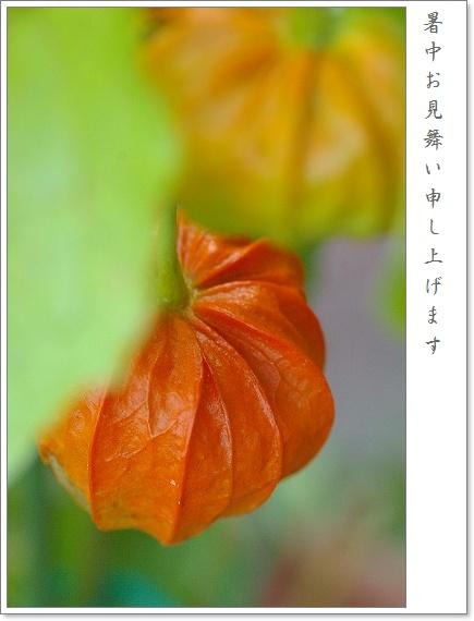 b0085917_00195.jpg