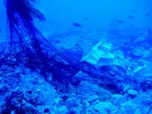 海底に沈んだ伝説の島、シピンに潜った!_a0043520_433287.jpg