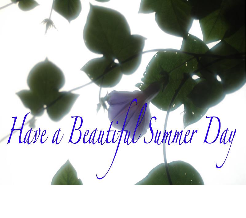 暑中お見舞い申し上げます_a0059621_23271067.jpg