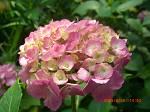 漢字の勉強 植物名_d0065324_18123254.jpg