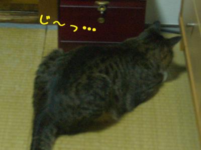 c0024830_2251269.jpg