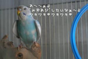 b0143835_15342012.jpg