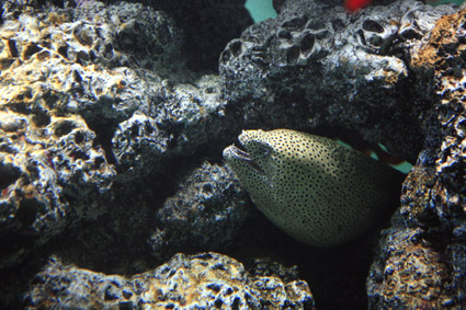 葛西臨海水族館その2_a0086851_20492996.jpg