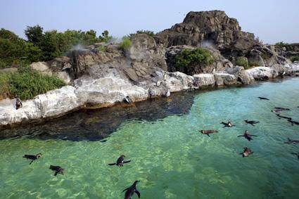 葛西臨海水族館その2_a0086851_20564476.jpg