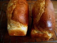ハンバーガーバンズと、その生地でミニ食パン_c0110869_23304518.jpg