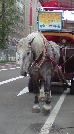 札幌なまら好き_c0082370_15464934.jpg