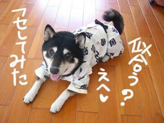平蔵的パジャマの作り方_b0057675_11461955.jpg